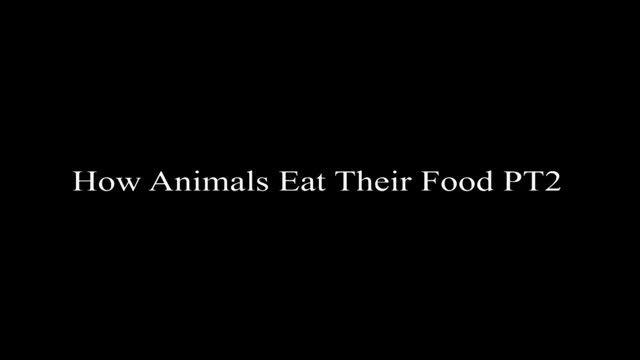اگه حیوان با انسان غذا میخورد