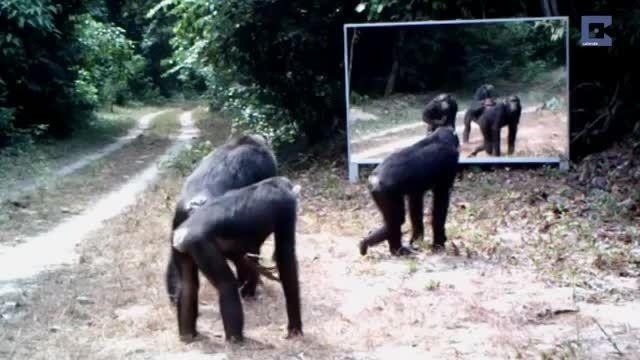 واکنش های دیدنی حیوانات جلوی آینه