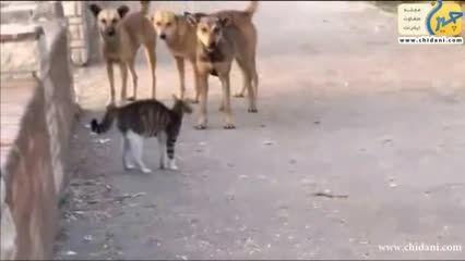 دفاع گربه از خودش در برابر سگ ها