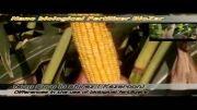 تاثیرات کودهای نانو برروی محصولات کشاورزی از نانو استور