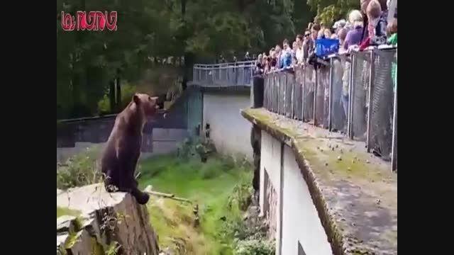 غذا خوردن خرس تنبل در باغ وحش فیلم گلچین صفاسا