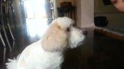 سگم دل داره...خیلی سگ باحالیه ها...خخخخ