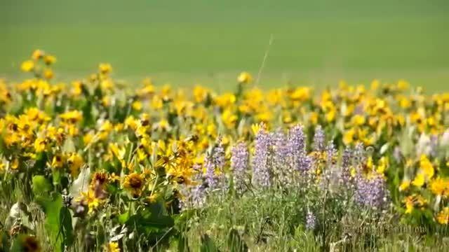 طبیعت زیبا همراه با موسیقی آرامش بخش 11 (HD)
