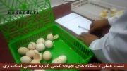 آزمایشگاه جوجه کشی از تخم نطفه دار