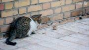 بازی گربه با موش، موش سگ جون...