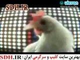 دلیل اصلی گرون شدن مرغ...(خیلی خیلی طنز)