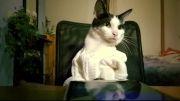 کارکردن گربه با گوشی نوکیا لومیا