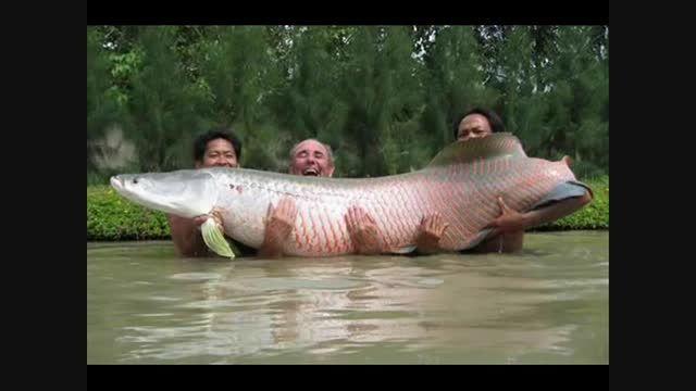 لذت ماهیگیری با قلاب با دیدن این ماهیها نیز حس می شود