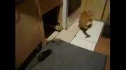 ترس فجیع گربه از موش!!