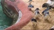 سفر به دنیای حیوانات با ویدیوهای تبلیغاتی  نوت ۴ -1
