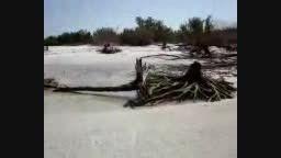 جسد پری دریایی کنار ساحل