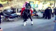 اسب عرب چک چک (نریمان*خبیثه)