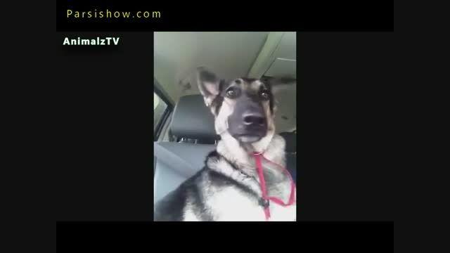 کلیپ لحظات زیبا و خنده دار حیوانات خانگی