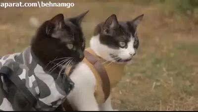 جنگ تمام عیار با گربه ها.عالیه :))