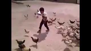 حمله مرغ ها به کودک(بامزه)