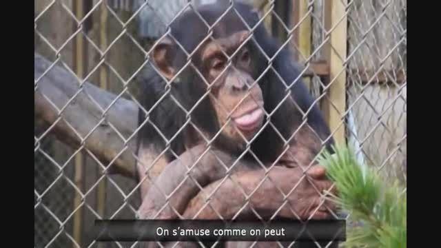 میمون بسیار بامزه
