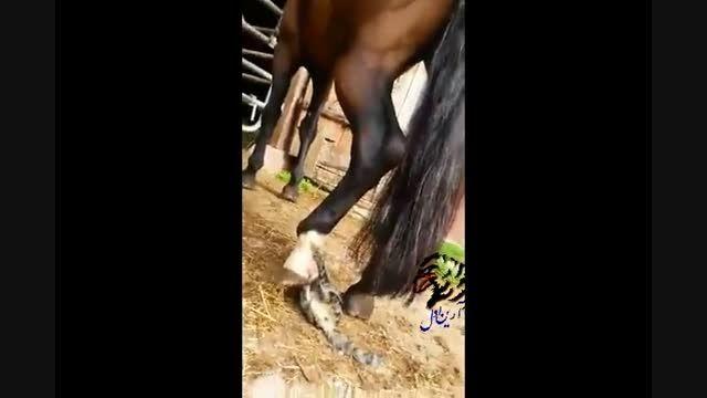 بازی با دم اسب