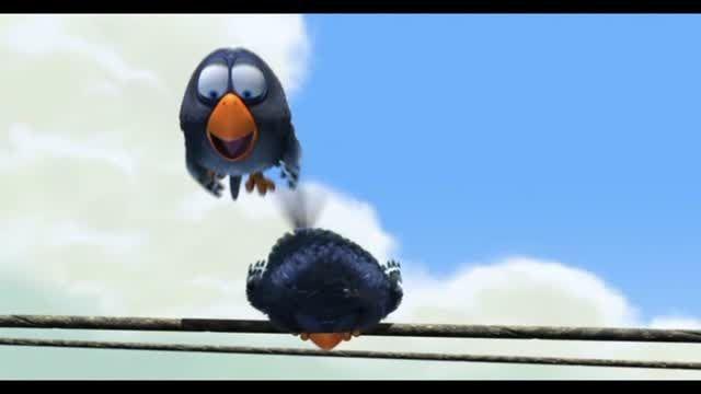پرنده ها  FOR BIRD S