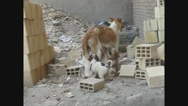 مهر مادری