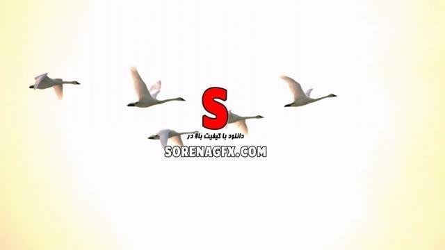 فوتیج بسیار زیبا با موضوع پرواز دسته قو در آسمان