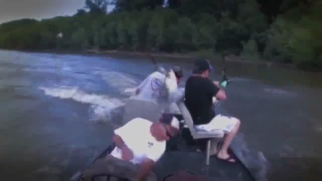 وقتی که ماهیگیران با حمله جمعی کپور ماهیان ضربه فنی شد