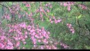 من و تو و درخت و بارون - خشایار اعتمادی