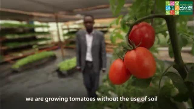 رشد گیاهان بدون خاک در آفریقا