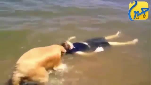 سگ بچه رو از غرق شدن نجات میدهد