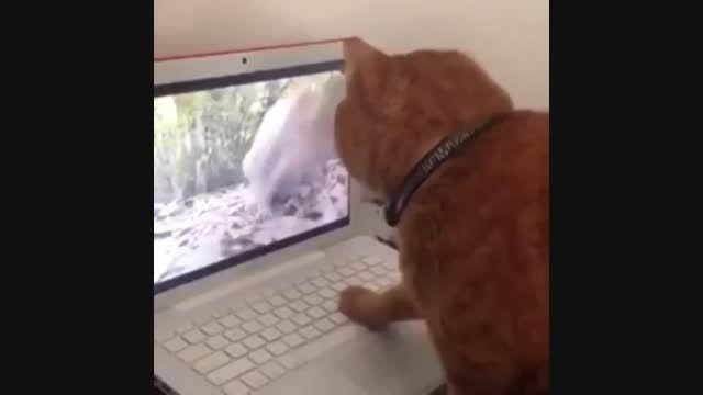 کلیپ گربه احمق رو نگاه کنین خیلی خنده دار