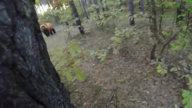 حمله ی خرس به دوچرخه سوار تنها