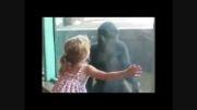 حمله حیوانات به بچه ها در باغ وحش !!
