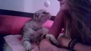 علاقه شدید گربه به دختر