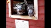 الاغ های خنده دار