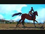 صحنه ی آهسته ی پرش اسب(خیلی جالبه)