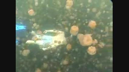دریاچه عروس دریایی