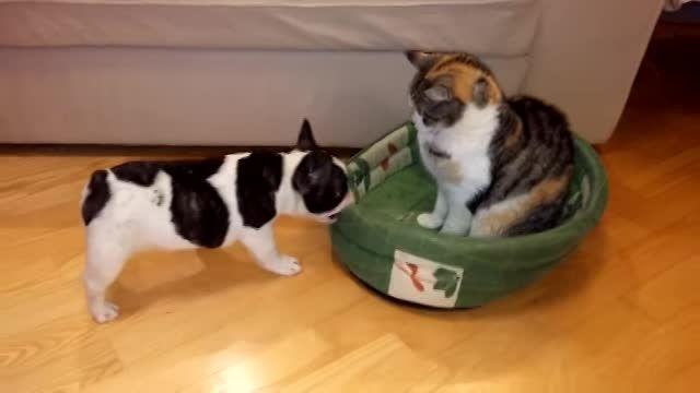 تلاش توله سگ برای پس گرفتن خانه اش