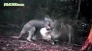 دنیای عجیب حیوانات قسمت3
