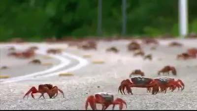 زندگی شگفت انگیز خرچنگ ها