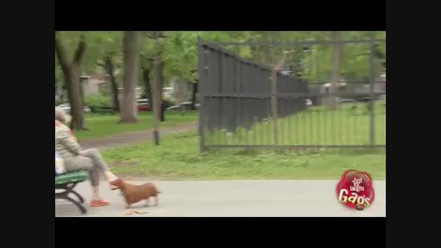 دوربین مخفی خنده دار کارگرای تنبل - Motefavetha.com