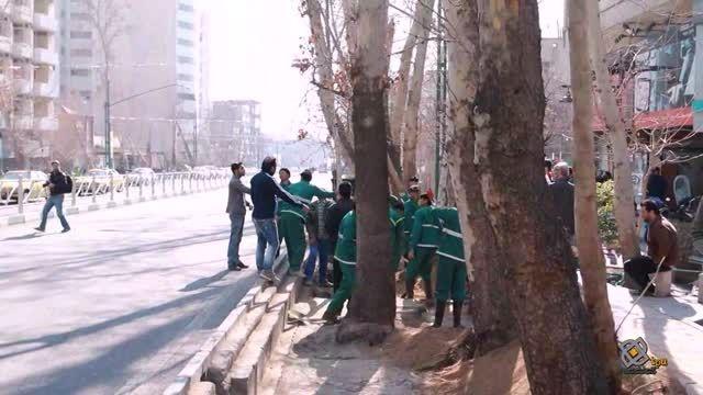آغاز طرح کاشت 5 میلیون درخت در تهران
