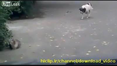 گربه ینی این