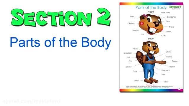آموش کلمات جدید زبان انگلیسی به کودکان (اعضای بدن) 3
