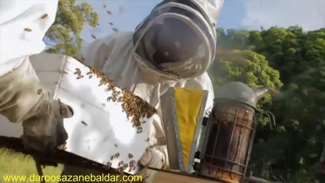 کندوی جدید با برداشت عسل آسان در استرالیا