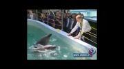 فیلم؛ پوتین به دلفین ها غذا می دهد