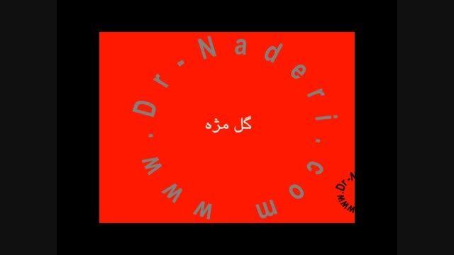 گل مژه - مرکز چشم پزشکی دکتر علیرضا نادری