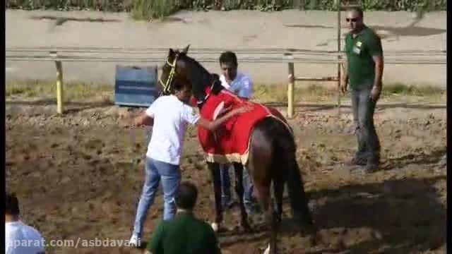 هفته اول مسابقات کورس اسبدوانی ویژه اسب عرب تهران 1394