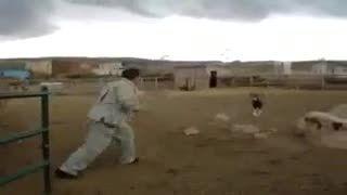 حمله ی قوچ به انسان
