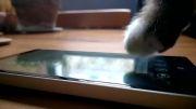 گربه ها شما را به خرید لومیا 930 ترغیب می کنند!