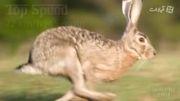 ده حیوان سریع دنیا