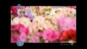 تیزر جدید و زیبای شبکه 1 با صدای محسن چاوشی